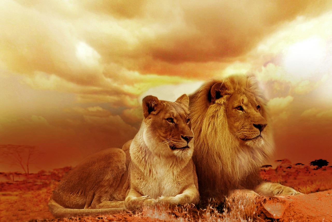 Togarepi - Lions